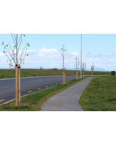 Tree Stakes 50 x 50 x 1800mm